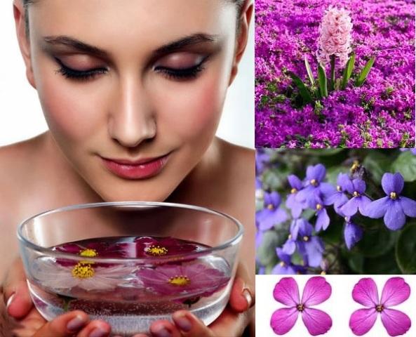 Trị mụn cám bằng hoa violet